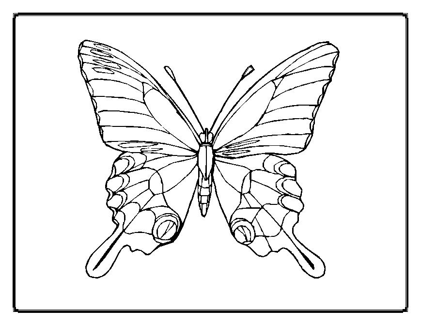 Butterfly designs to color - photo#5