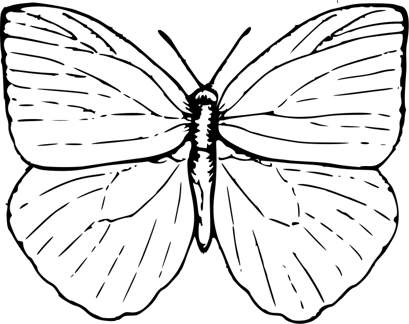 butterfly coloring pages preschool thomas - photo#45