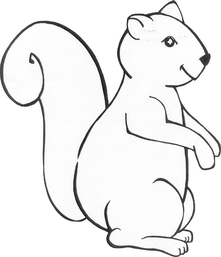 Squirrel template coloring home for Coloring page of a squirrel