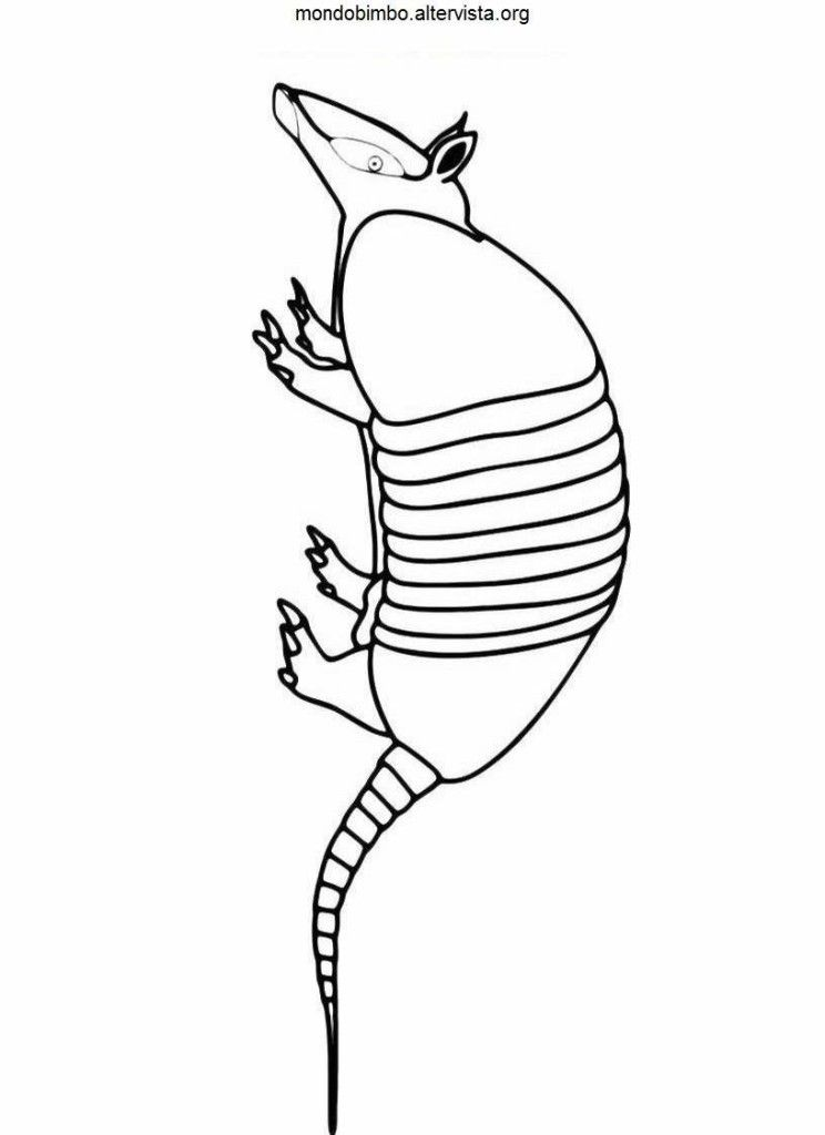 Armadillo Coloring Page Coloring