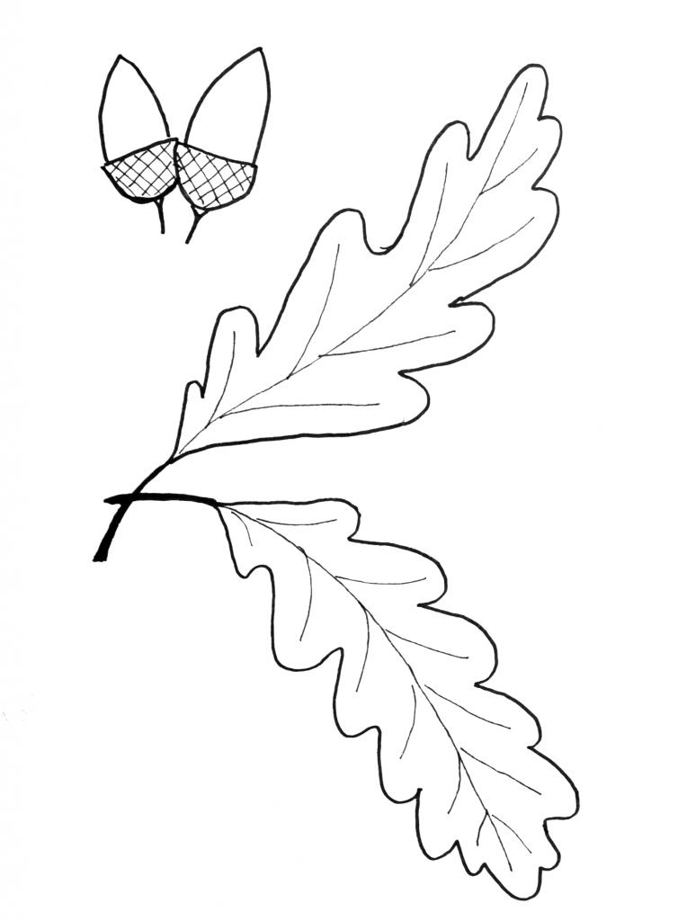 oak leaf template coloring home. Black Bedroom Furniture Sets. Home Design Ideas