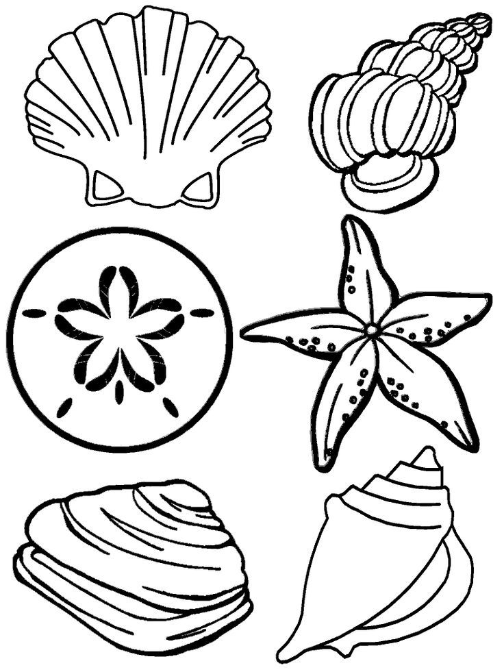 Seashell coloring pages coloring home for Coloring pages of seashells