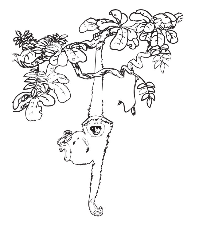 Coloring Pages Plants And Animals : Rainforest plants coloring pages az