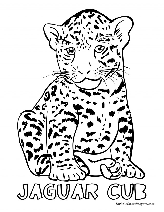 coloring pages baby jaguar - photo#5
