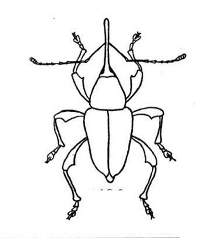 bug coloring pages | Coloring Picture HD For Kids | Fransus.com650