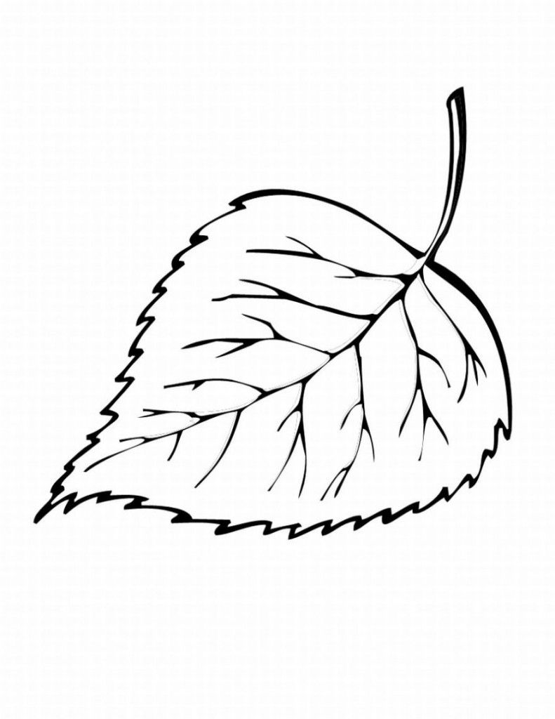 simple leaf coloring pages virtren com