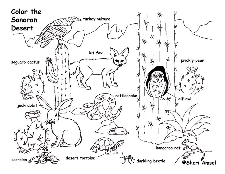 Coloring Pages Plants And Animals : Desert animals coloring pages az