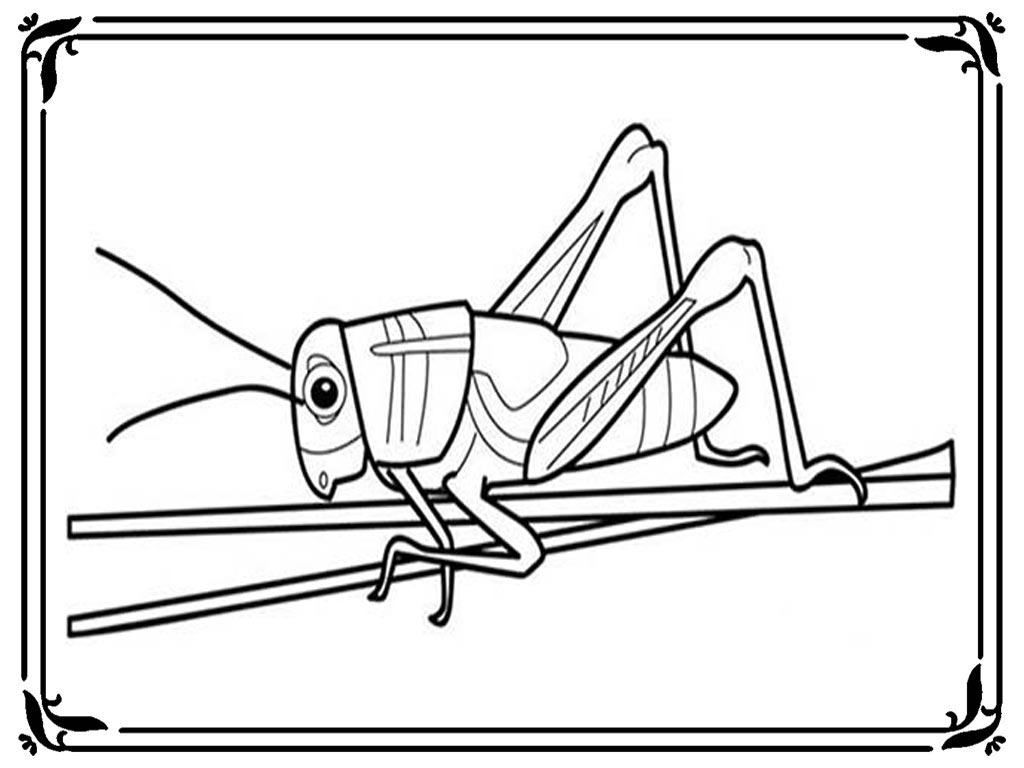 Grasshopper Coloring Pages To Print | Realistic Coloring Pages