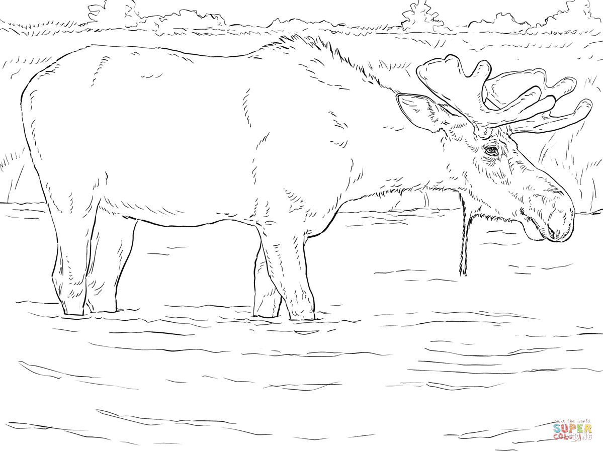 Coloring Pages Of Moose Coloring Home