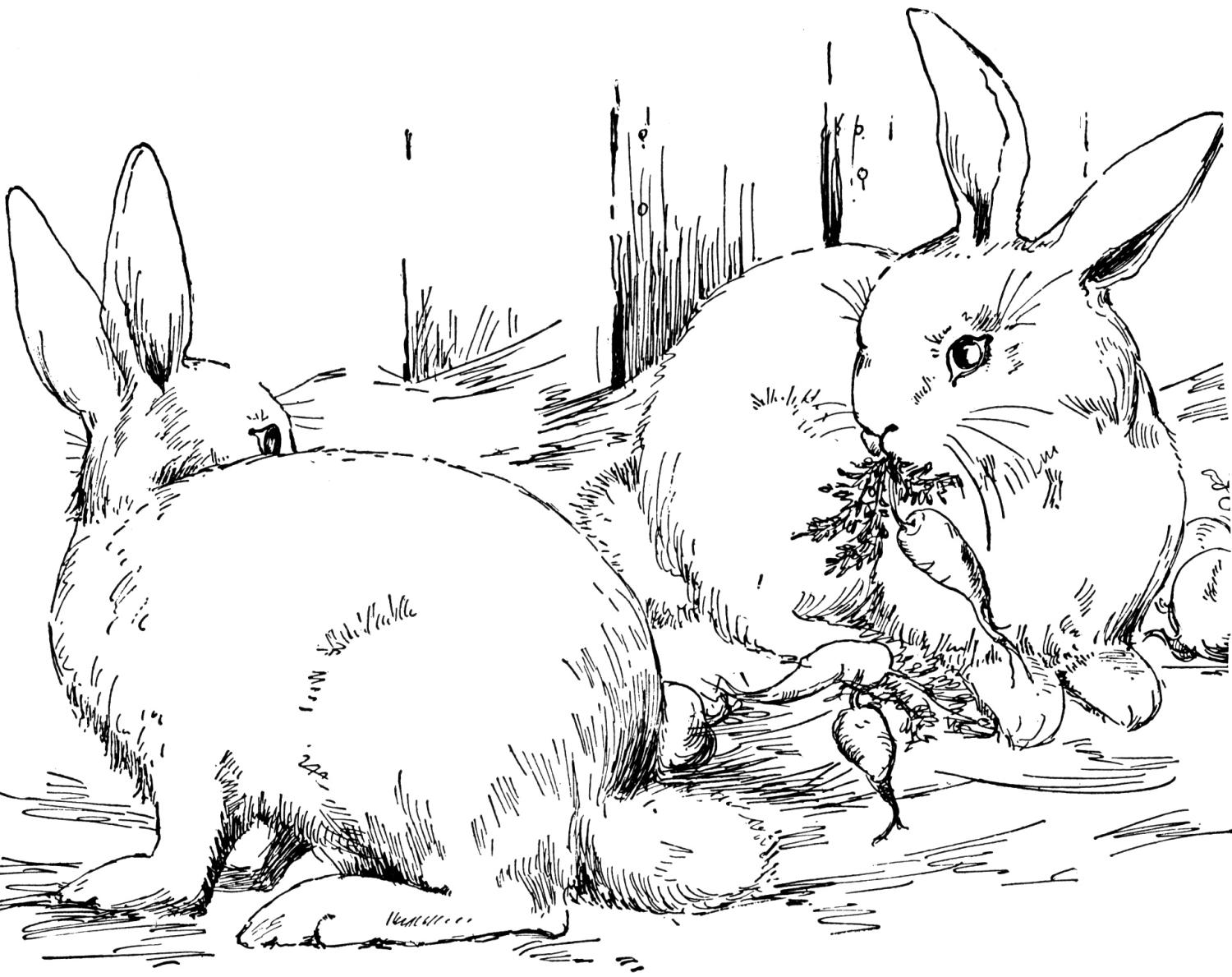 Coloring pages rabbit - Bunny Coloring Pages 20 Pictures Colorine Net 17764