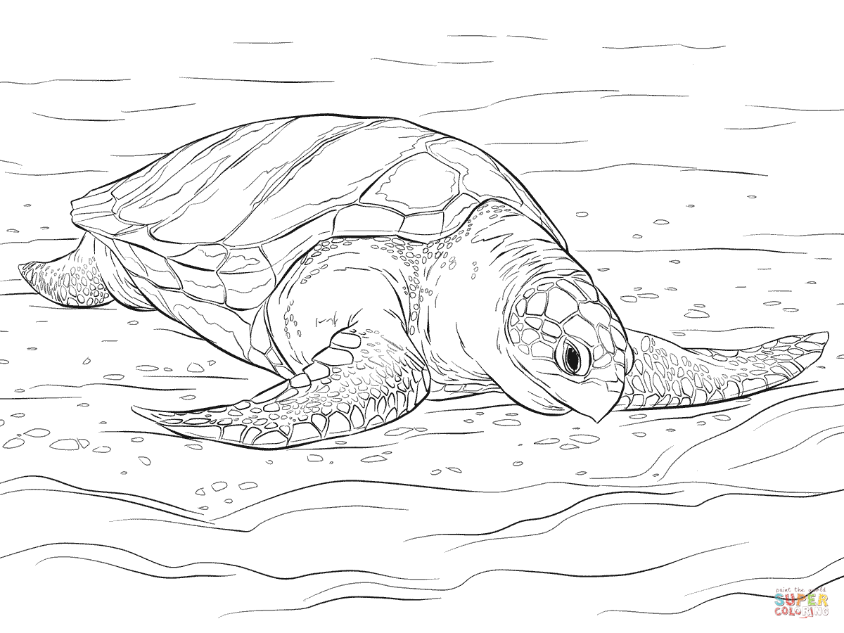 sea turtle coloring page realistic ornate box turtle with sea