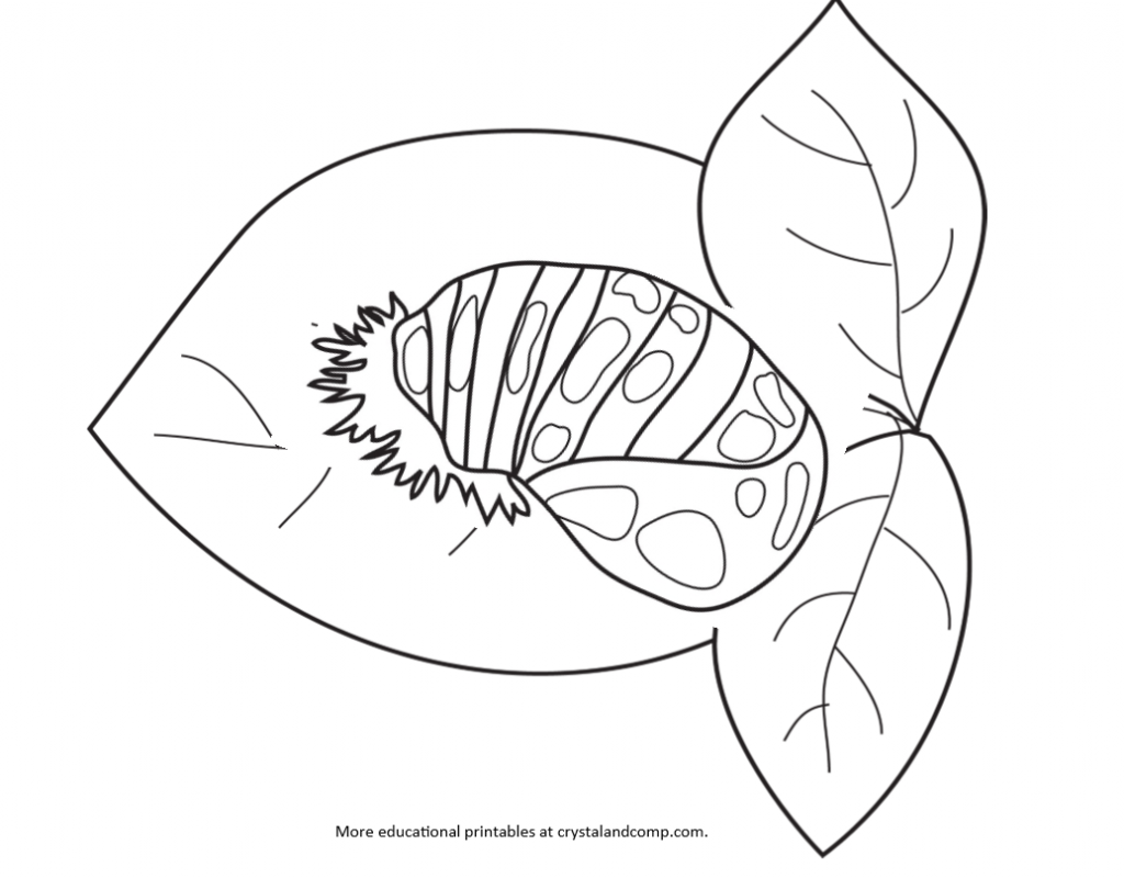 Coloring pages of ladybugs for kids - Kid Color Pages Ladybug