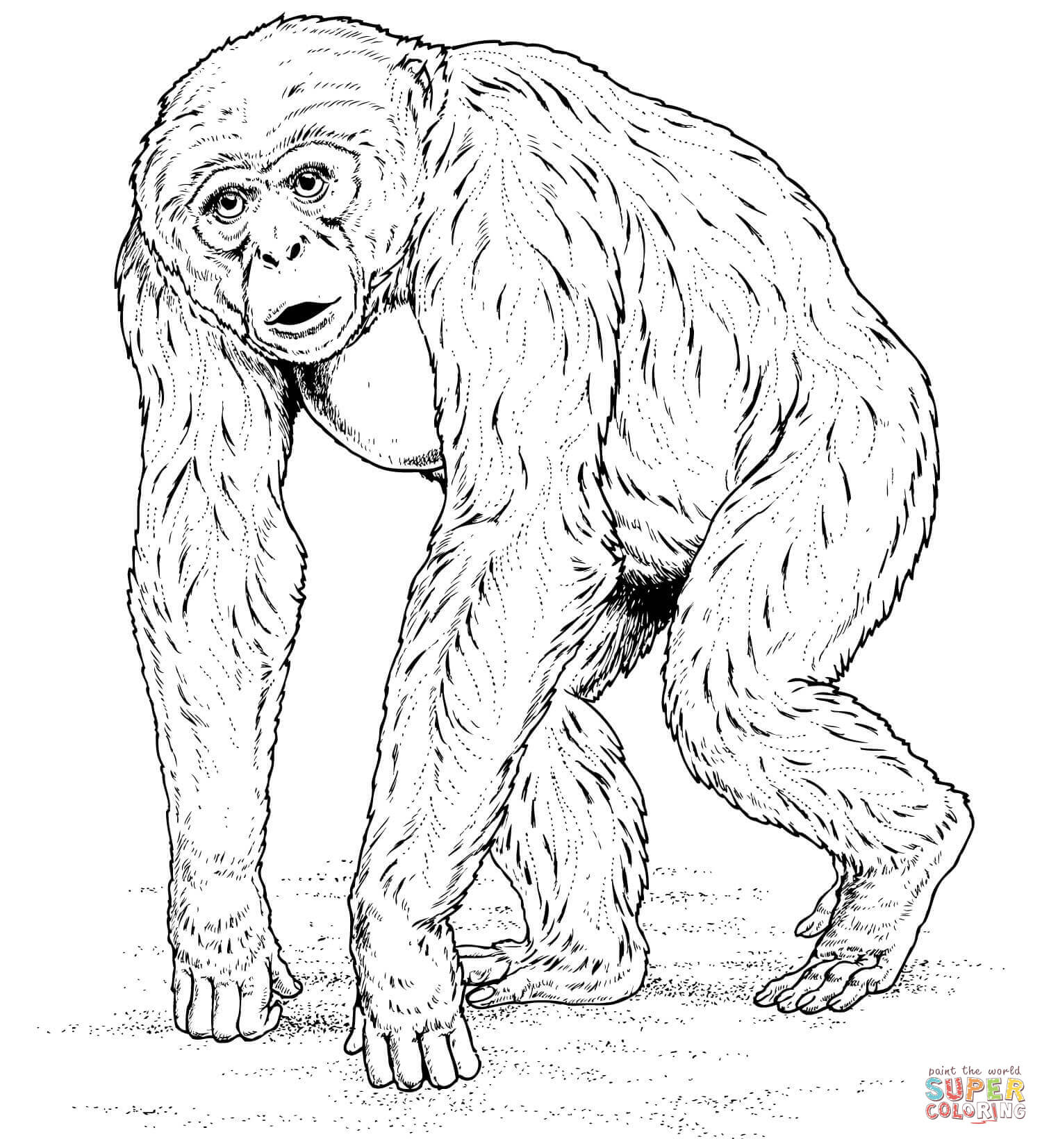 Ape Coloring Page Gorilla Coloring