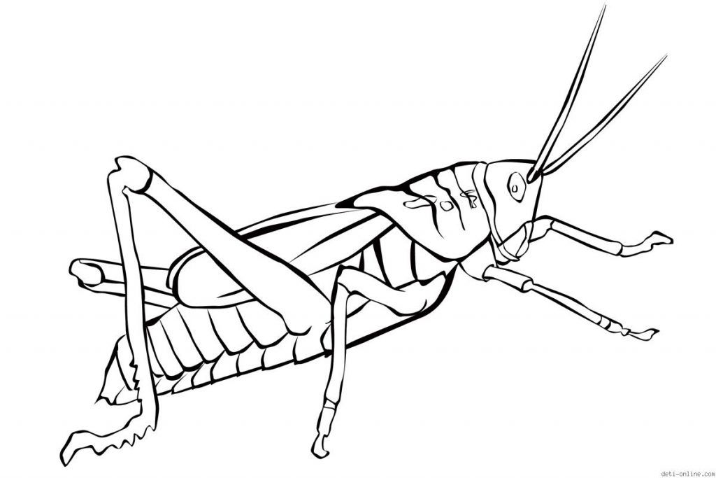 Grasshopper Coloring Pages For Kids - Preschool Crafts