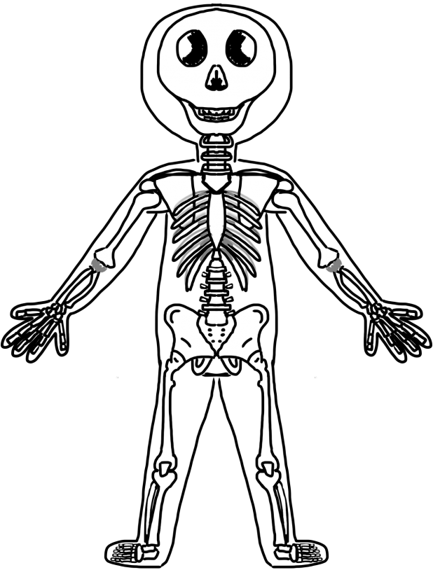 human body systems coloring pages - photo#15