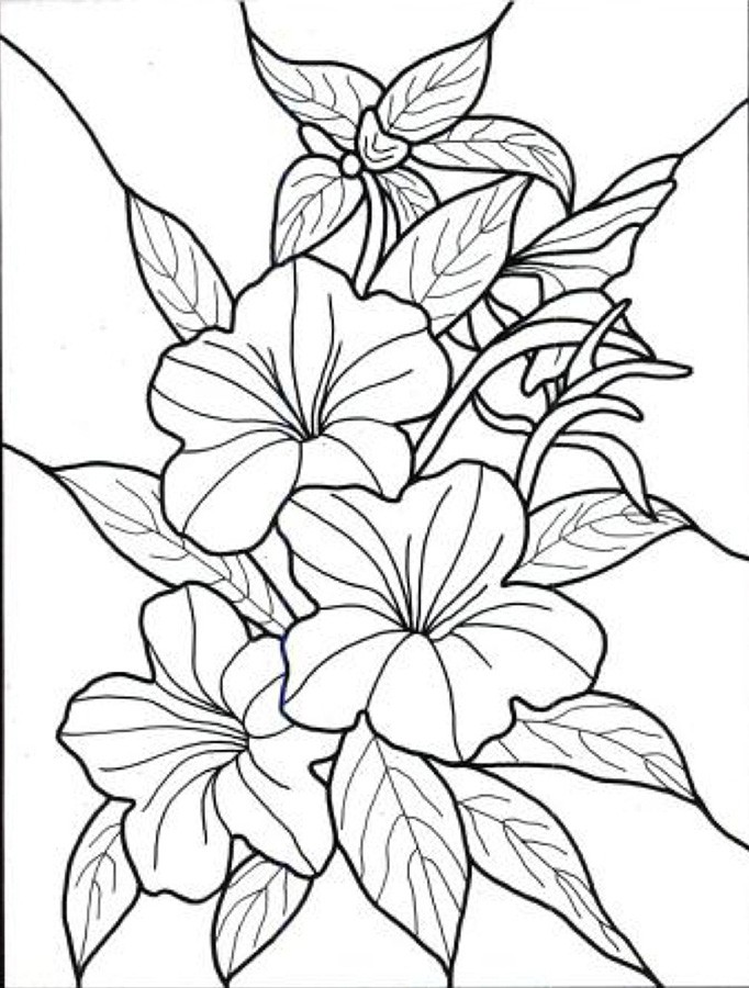 Free Flowers Drawing Pages, Download Free Clip Art, Free Clip Art -  Coloring Home