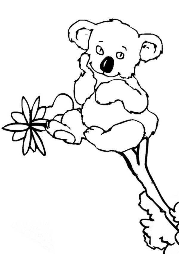 Koala bear coloring pages