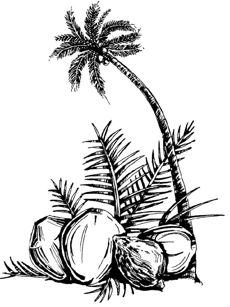 Coconut palm tree coloring page