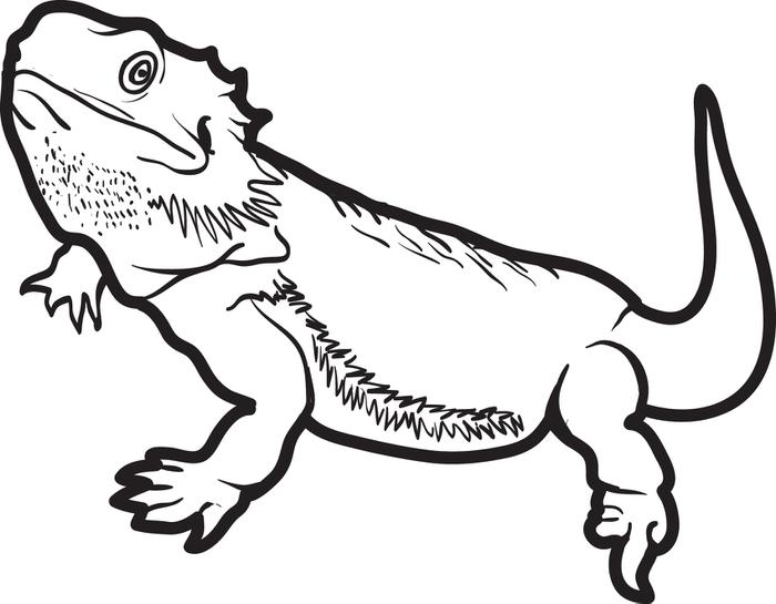 Horned Lizard Coloring Page Home
