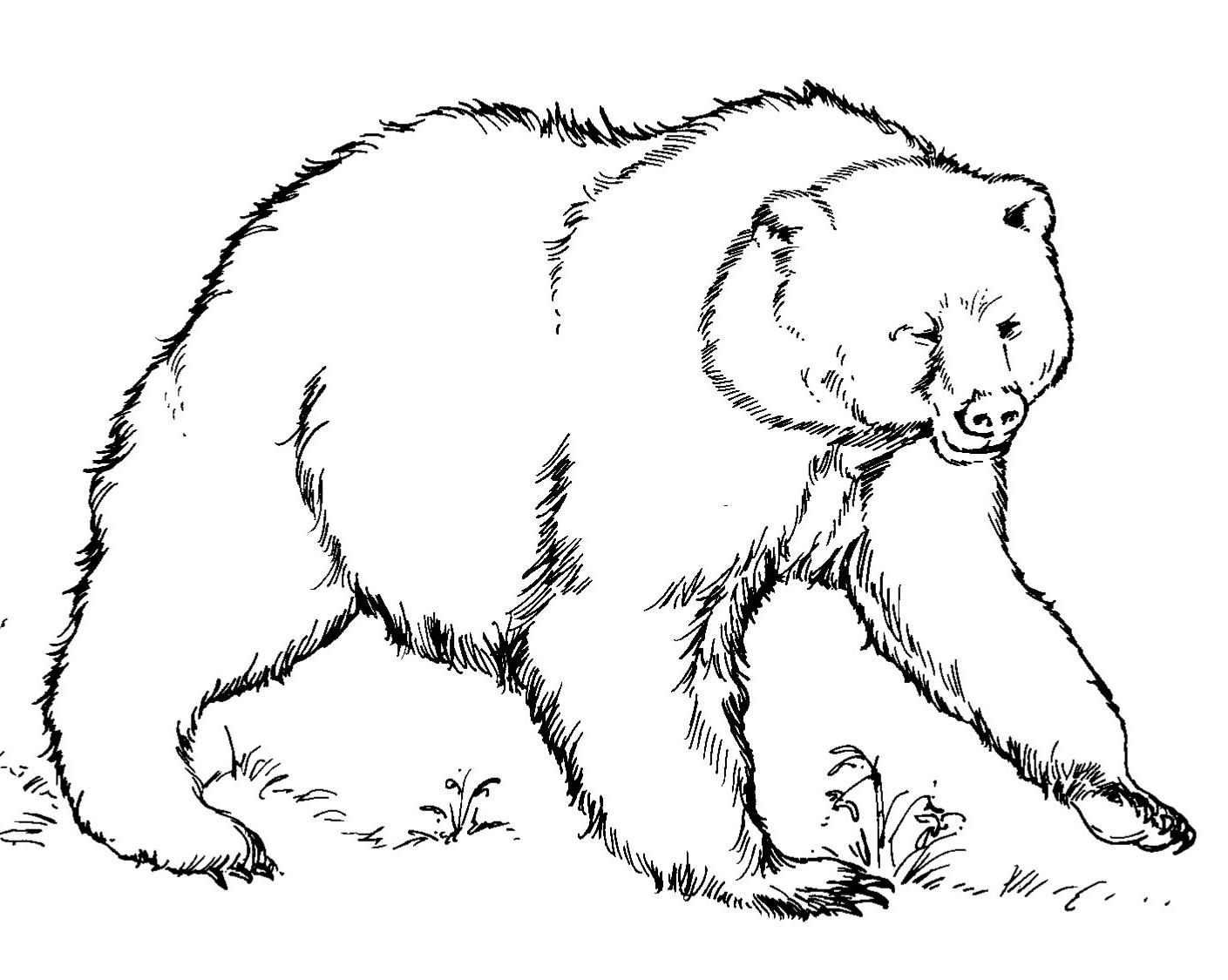 Brown Bear Printables - Coloring Home