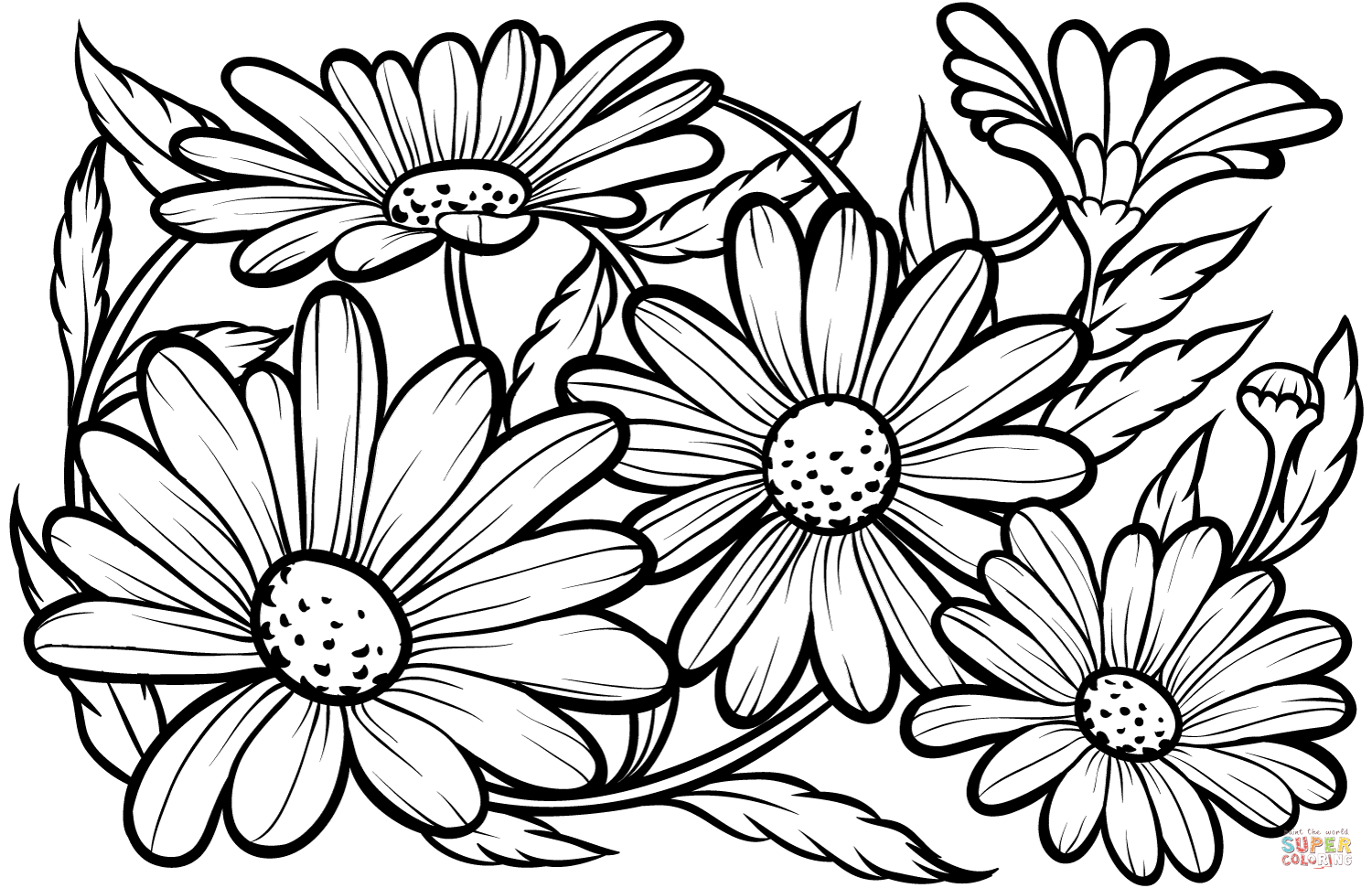 Daisies Coloring Pages Coloring Home