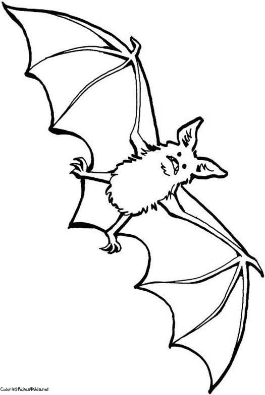 Bat Drawings For Kids - Coloring Home