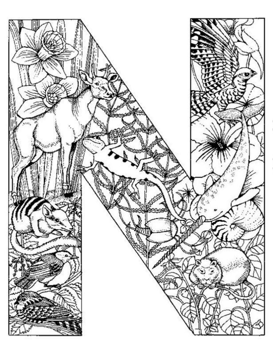 intricate coloring pages for adults - intricate coloring pages free printable coloring home