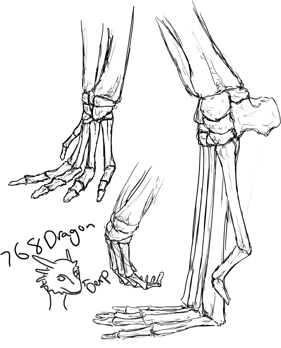 foot anatomy coloring pages - photo#24