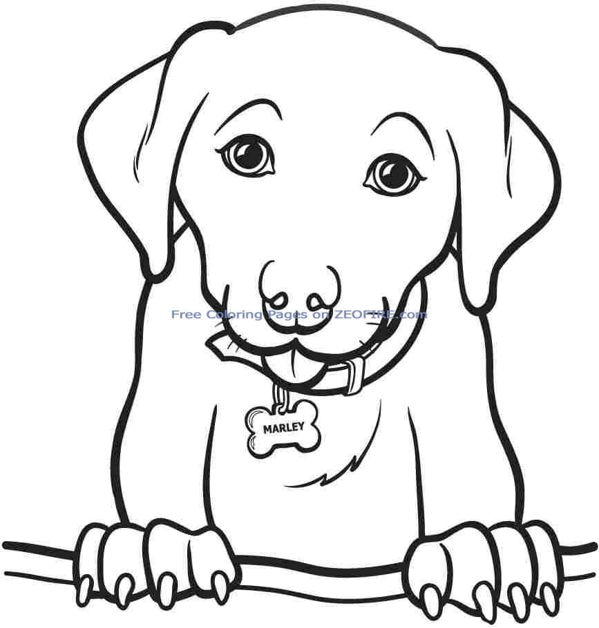 Teen animal coloring pages ~ Animal Coloring Pages For Teens - Coloring Home