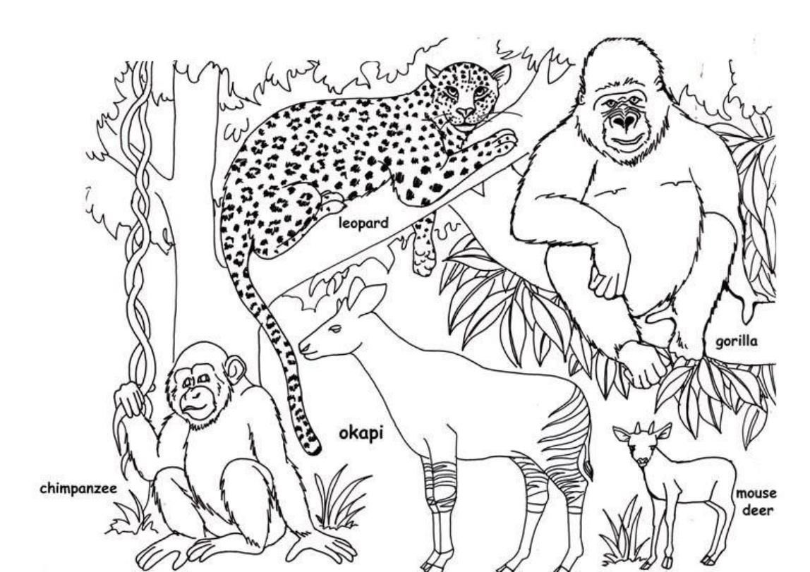 Jungle Animals Coloring Pages Free - Coloring Home | 811x1148