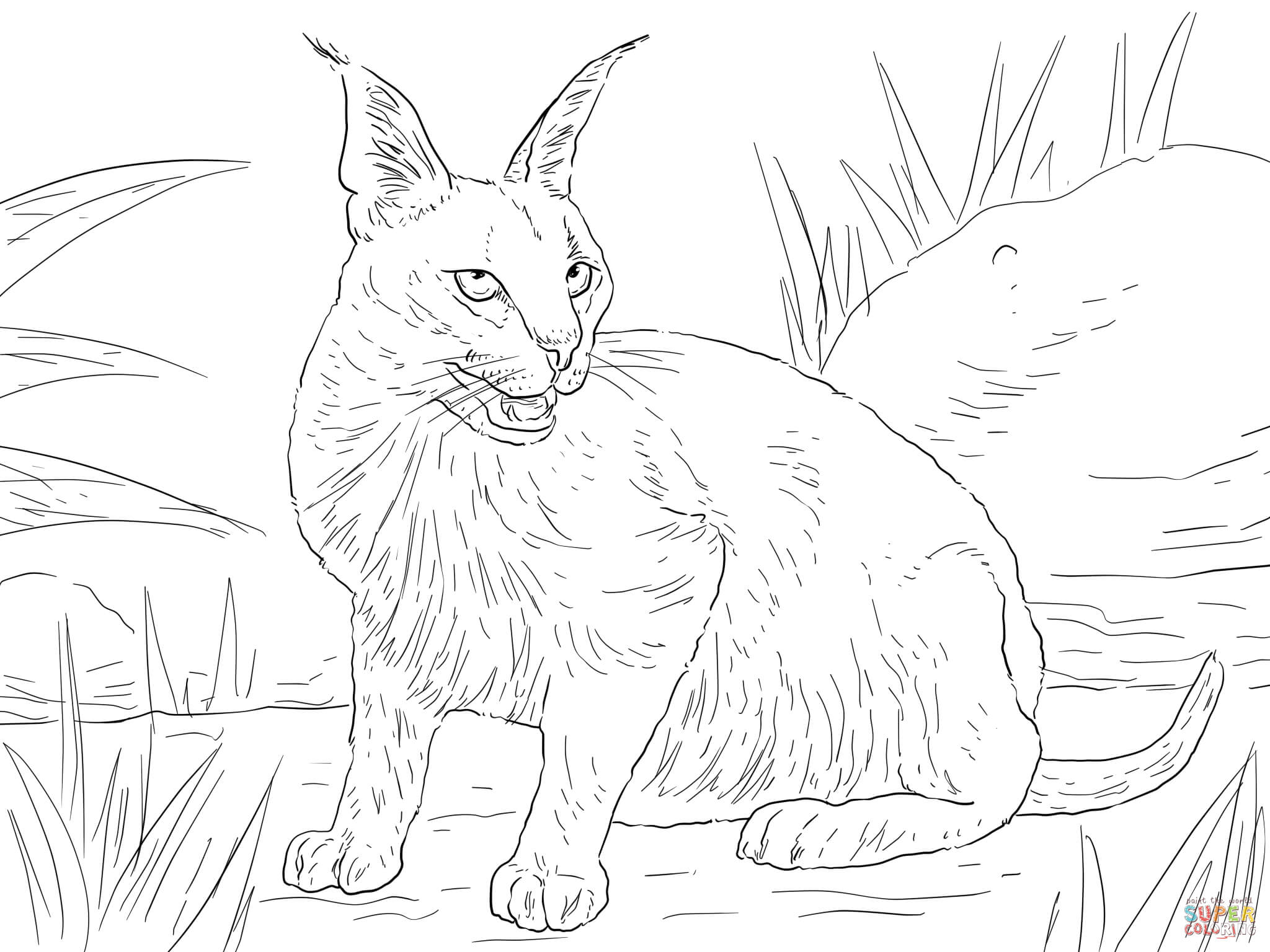 cute caracal coloring page free printable coloring pages