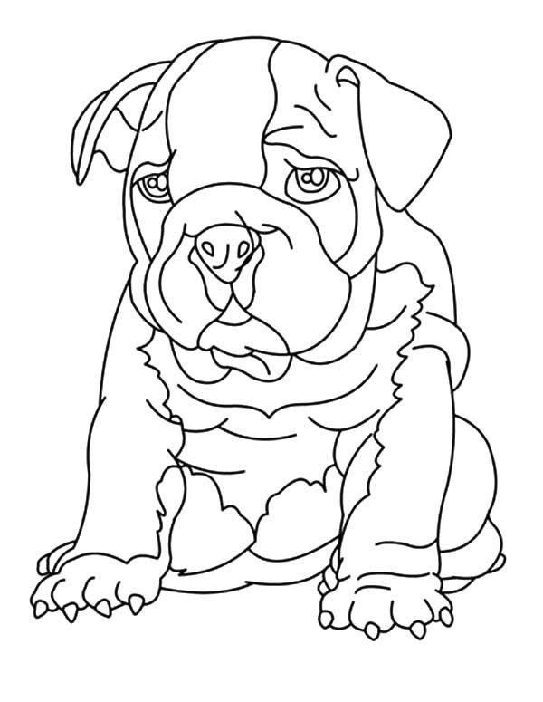 printable and coloring pages bulldog - photo#36