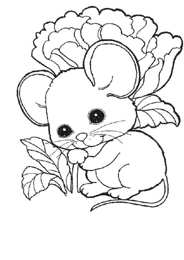 cute rats colouring pages - photo #8