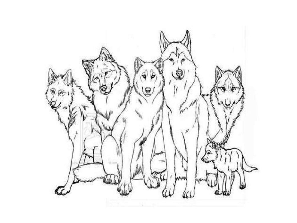Husky With Cubs Coloring Pages