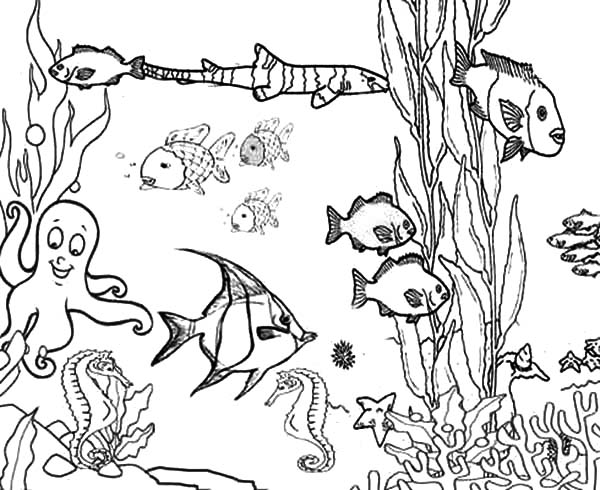 ocean bottom coloring pages - photo #24