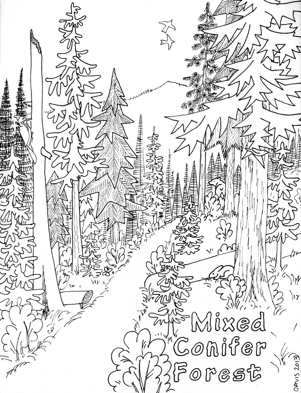 Coniferous Forest Coloring Page Coloring Page For Kids | Kids Coloring