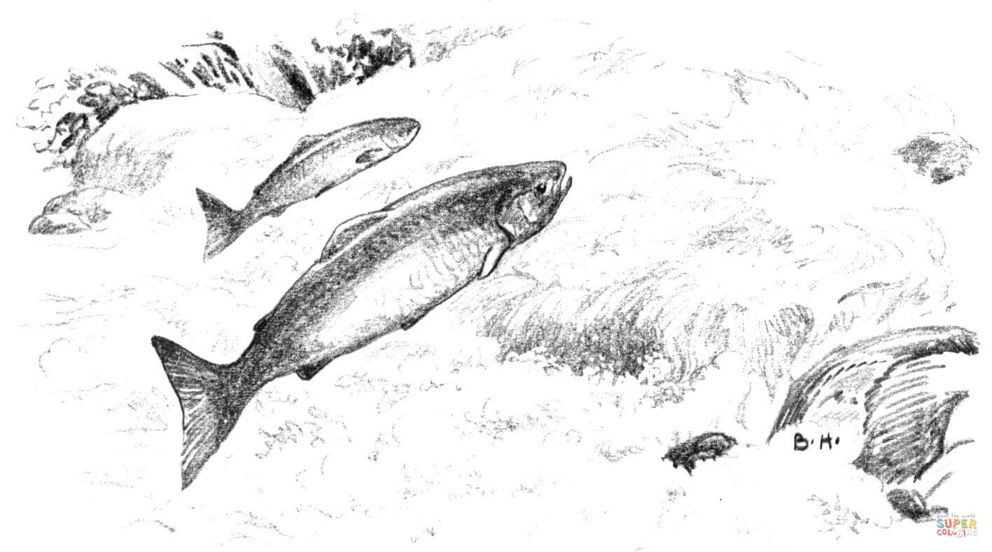 Leaping Alaska Salmon Coloring Page