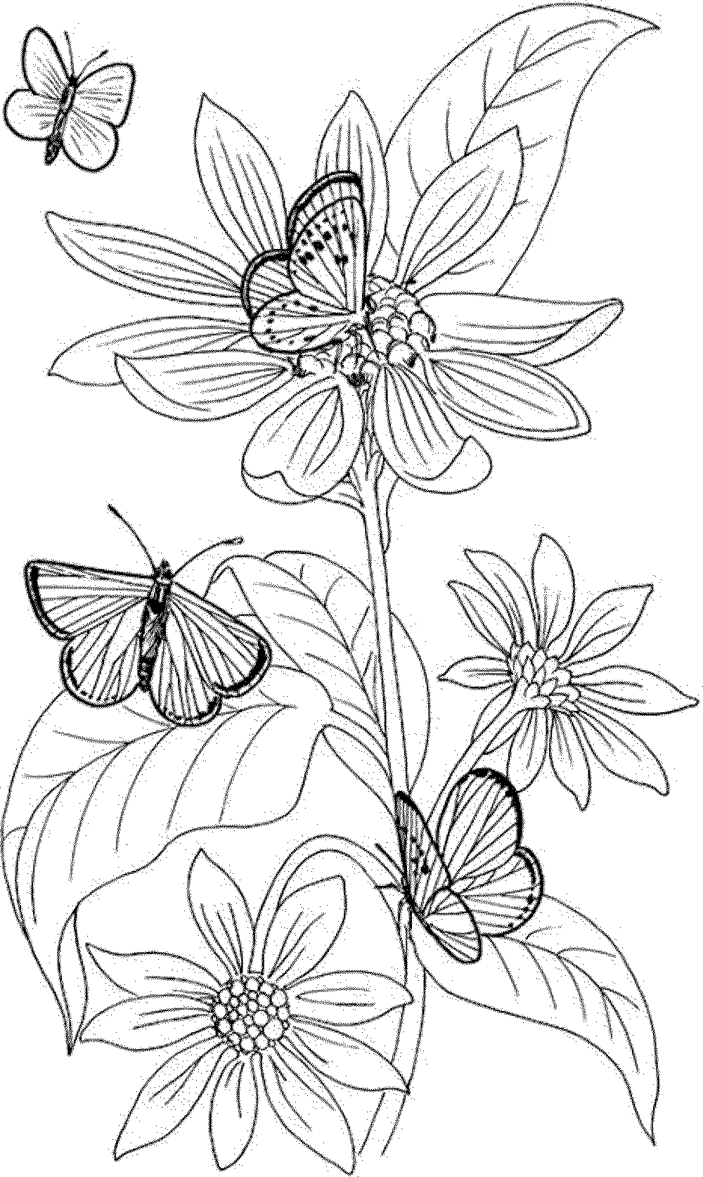 Free Printable Coloring Pages For Adults Fairies - Coloring Home