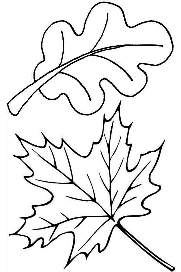 fall leaves coloring page - High Quality Coloring Pages