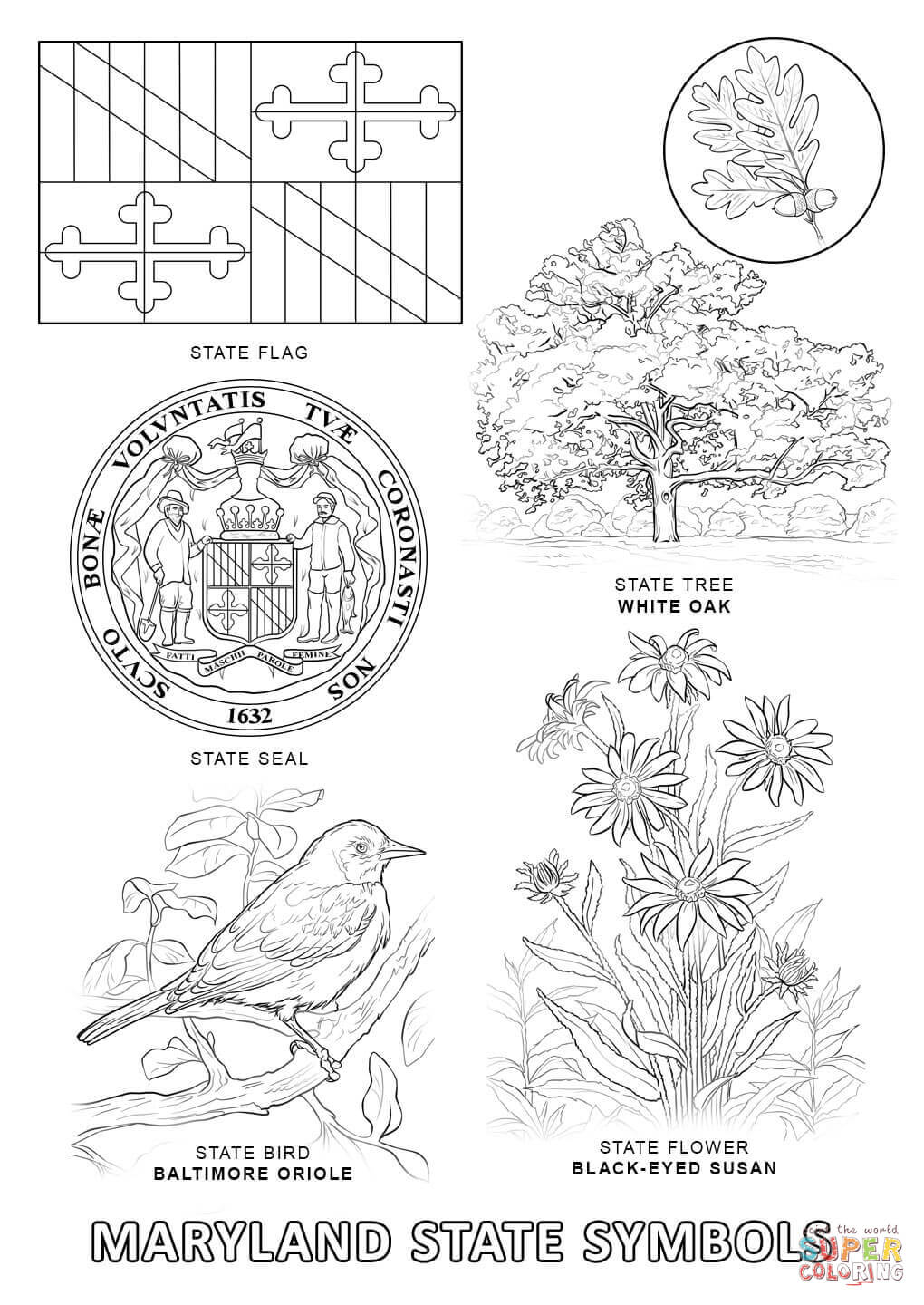 massachusetts state symbols coloring pages - photo#15