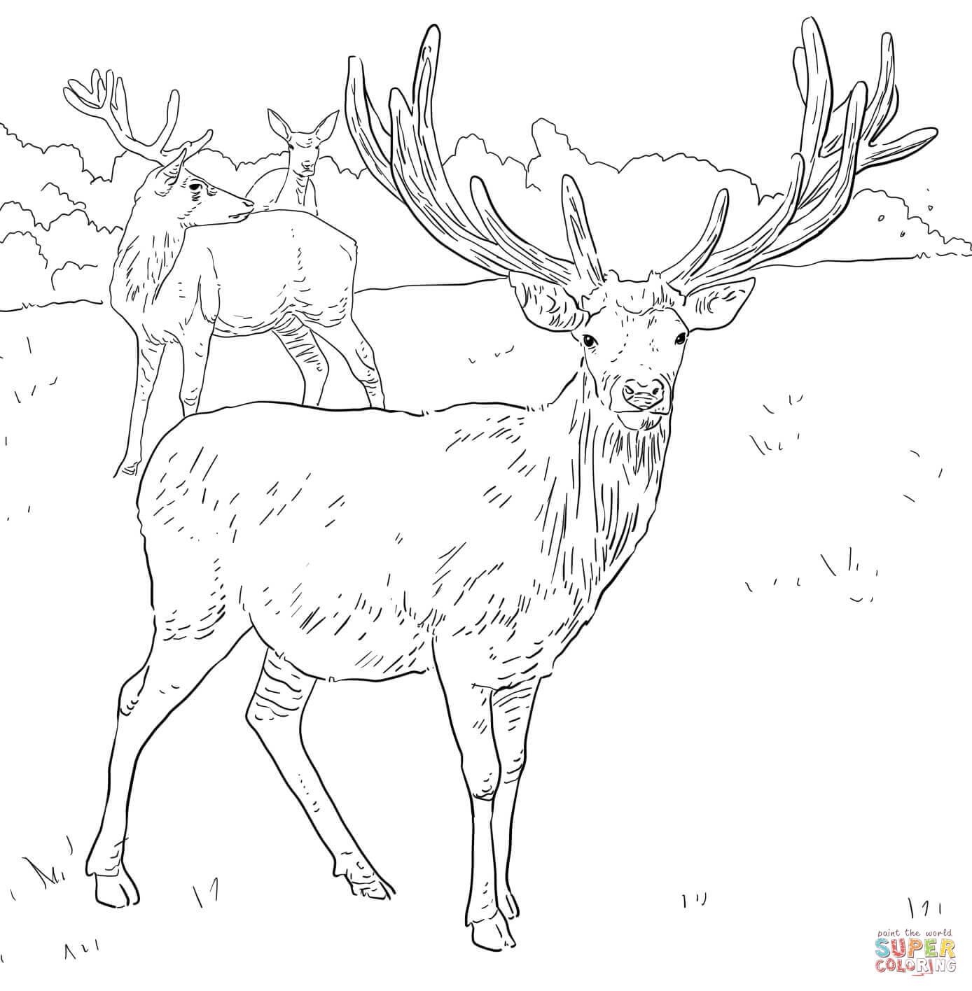 Mule Deer Coloring Page - Coloring Home