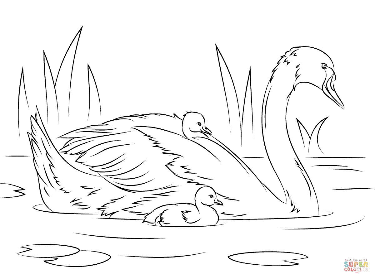 swan lake coloring pages | Swans Coloring Pages | Free Coloring Pages - Coloring Home