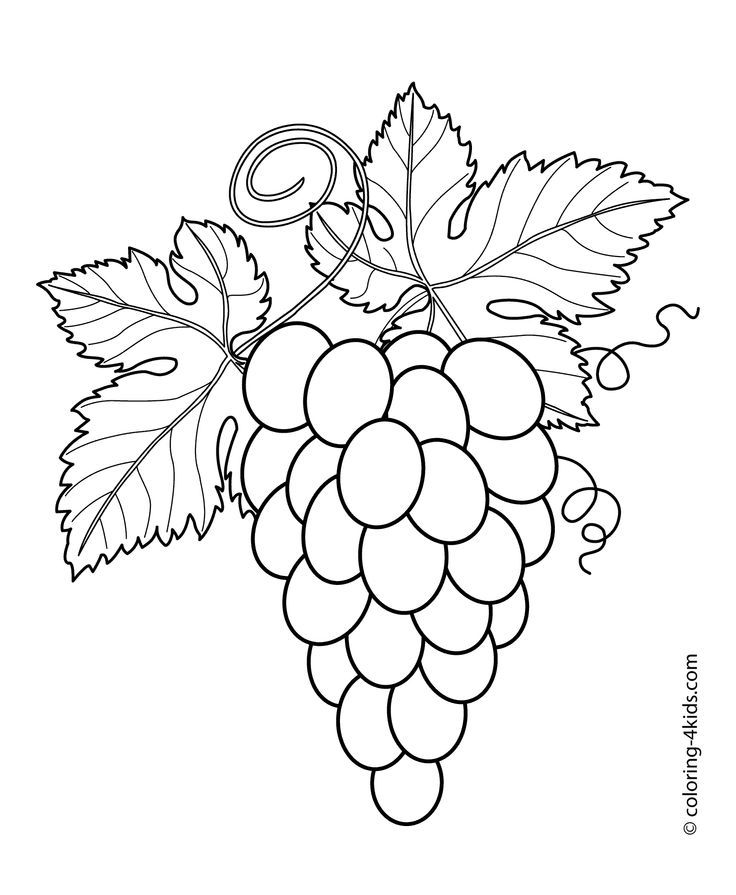 fruit basket coloring pages printable - photo#25