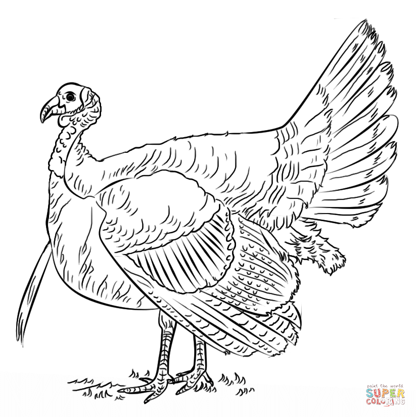 Turkeys coloring pages | Free Coloring Pages