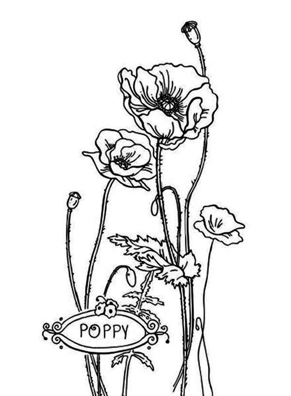 Remembrance Day Poppy Coloring