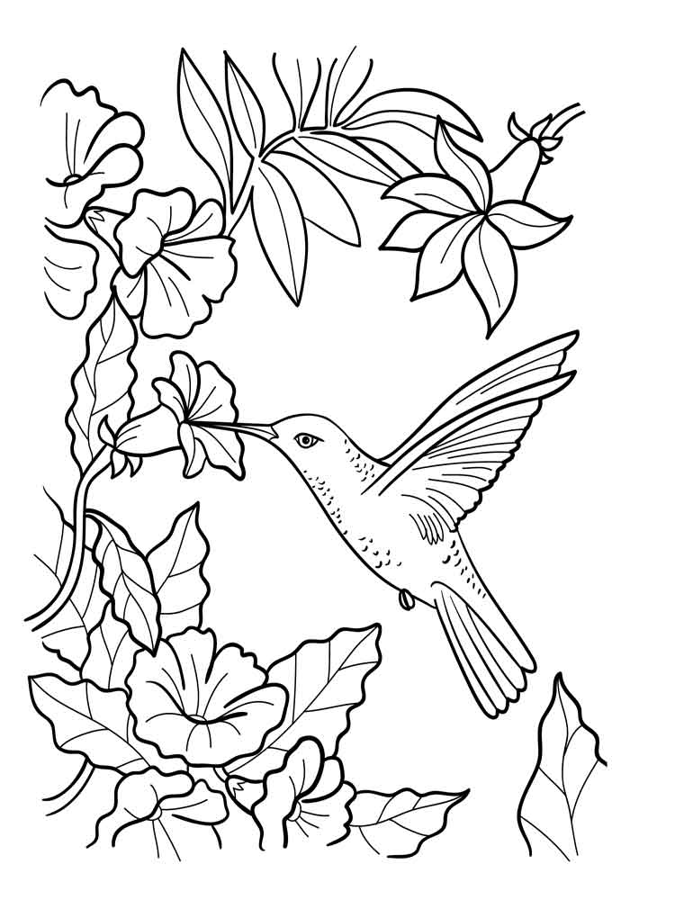 coloring pages of humming bird - photo#12
