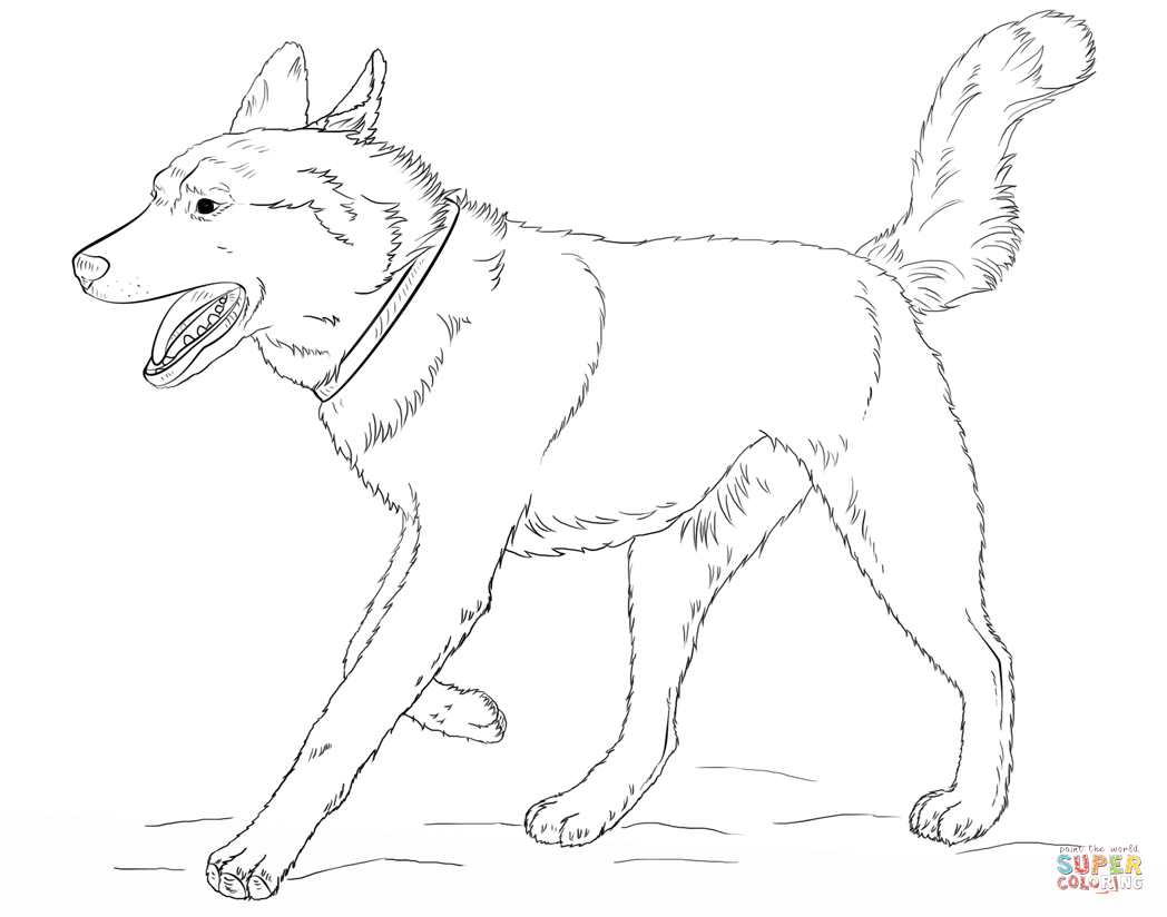 Siberian Husky Dog Coloring Page Free Printable Coloring Pages