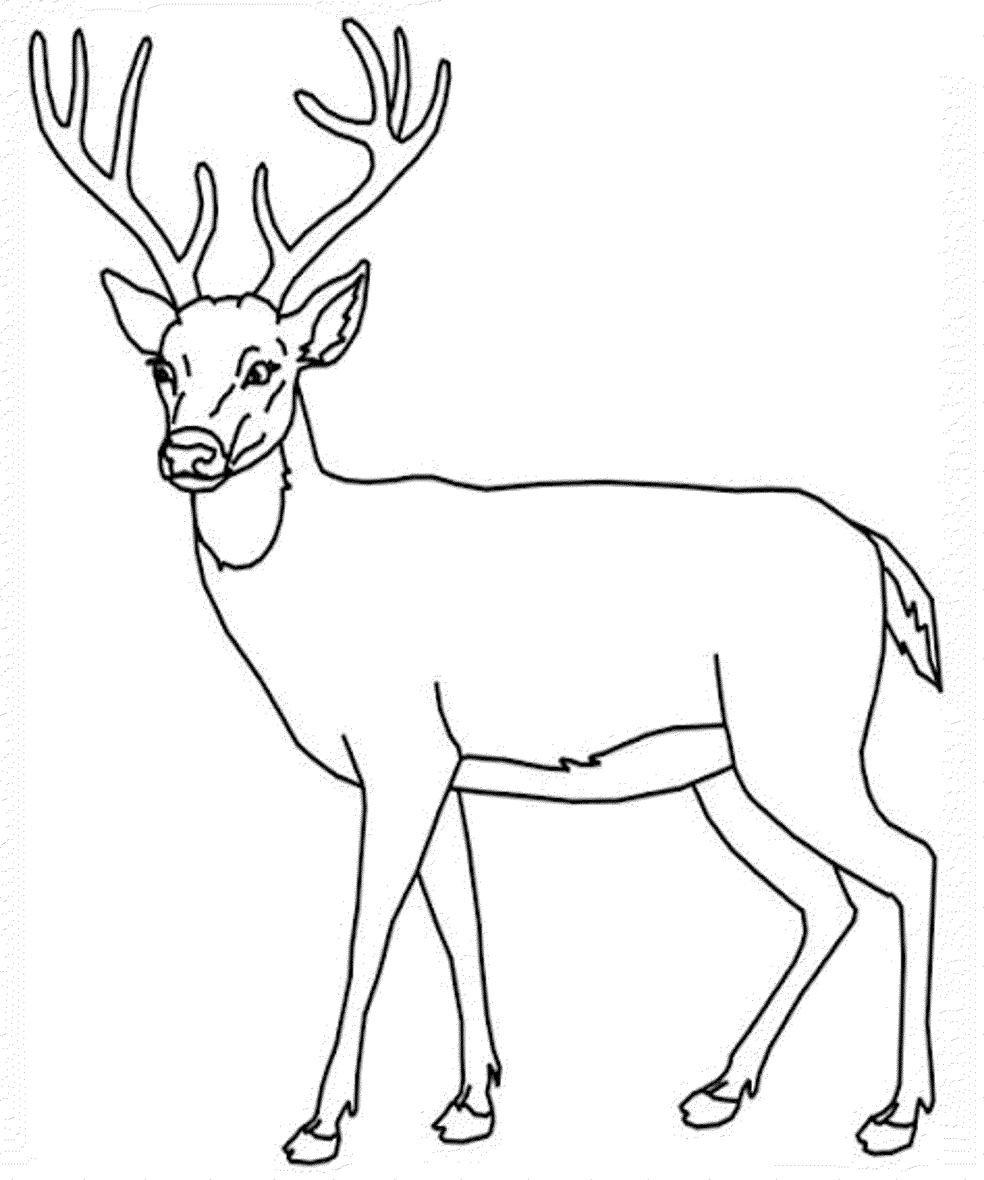 Deer Coloring Pages Kidsuki