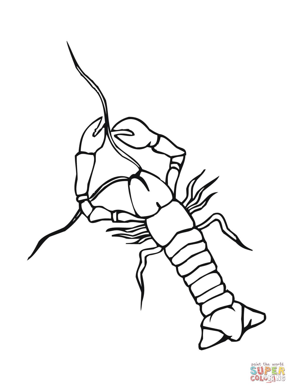 Crawfish Coloring Page Coloring Home Crawfish Coloring Page
