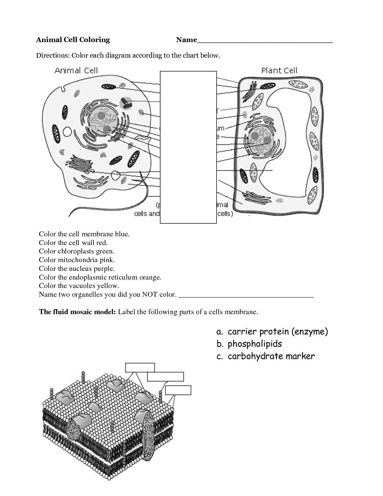 Plant cell and animal cell diagram worksheet